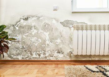 umidità-in-casa-muffa